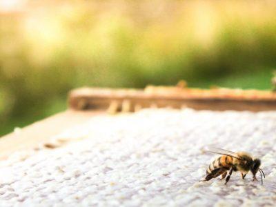 Honey Farm-31